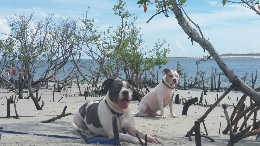 Ponce Inlet Beach Dog Park