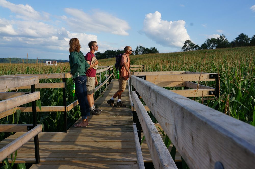 Great Vermont Corn Maze: 1404 Wheelock Rd, Danville, VT