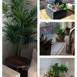 Exceptional Photo Of Interior Plant Service   San Diego, CA, United States. A Home