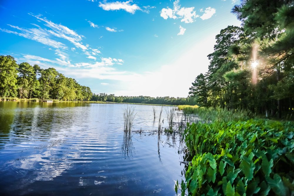 Lake Tombigbee Campgrounds: 1427 Campground Rd, Livingston, TX