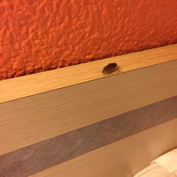 Photo Of Motel 6 Whittier Ca United States Roach Right On The