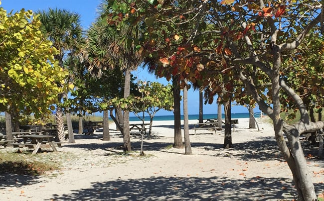 Camp Live Oak: 6503 N Ocean Dr, Dania Beach, FL