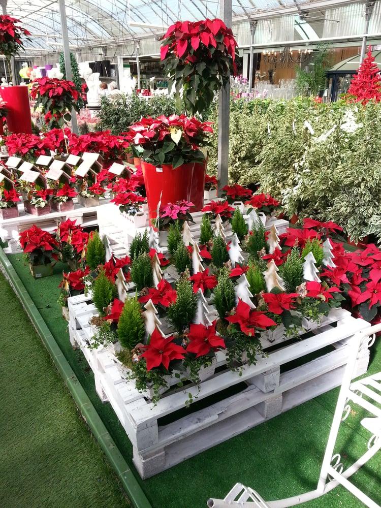 Flores de pascua yelp for Todo para viveros