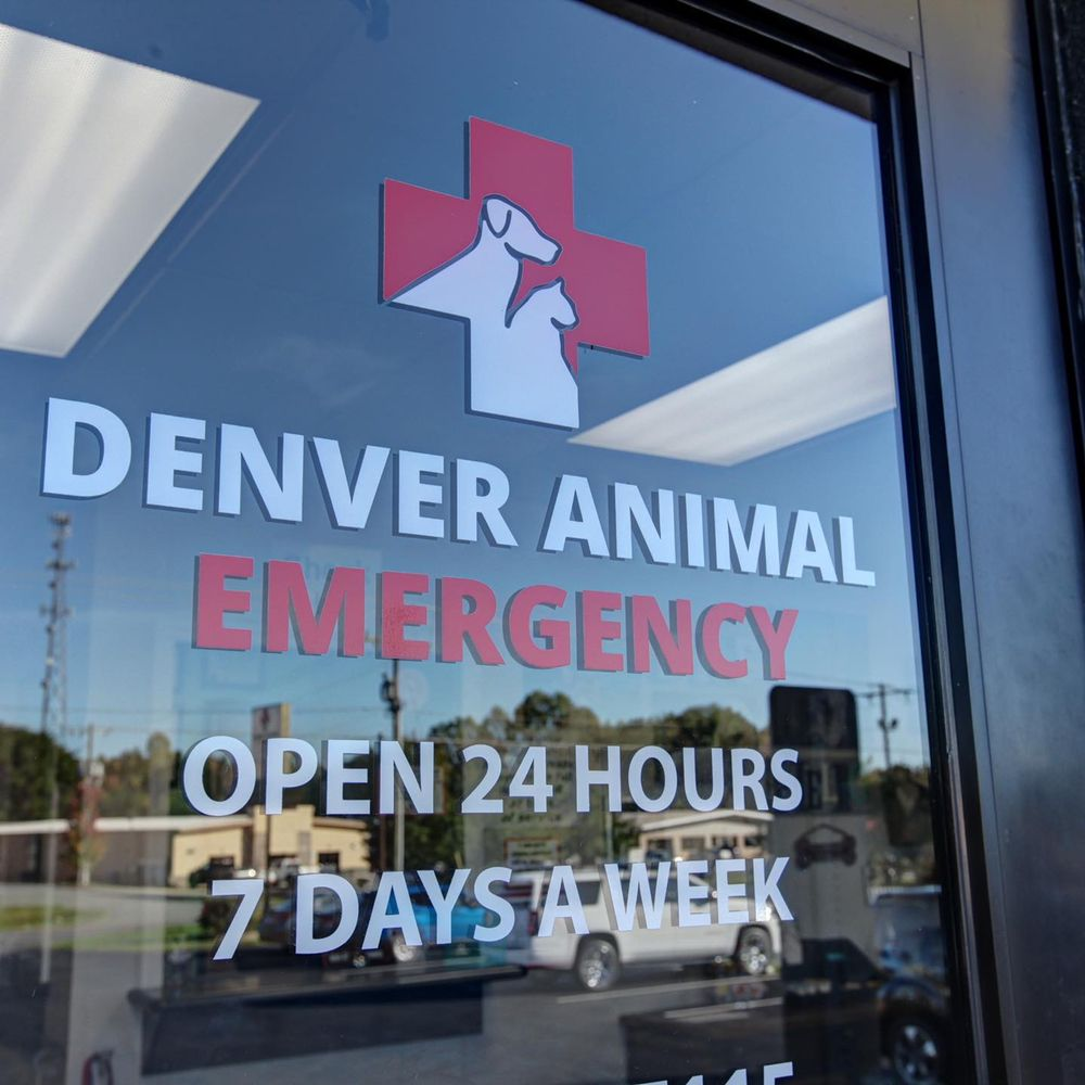 Denver Animal Emergency