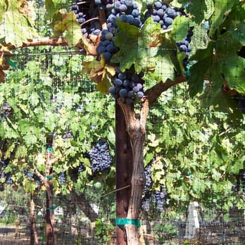 Verde Valley Wine Trail Tours 1010 S Main St