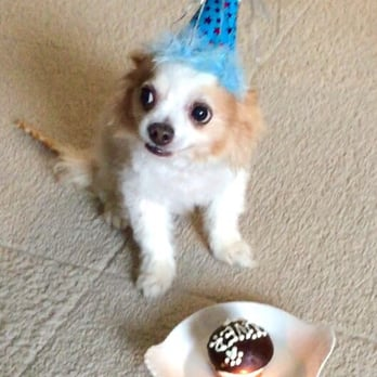 the dog bakery 276 photos 146 reviews pet stores 6333 w on birthday cakes for dogs in los angeles