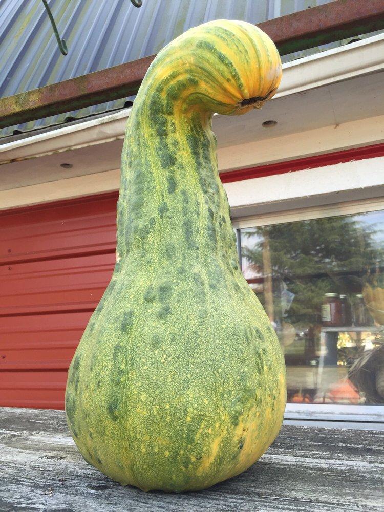 Foster's Produce & Corn Maze: 5818 State Rt 530 NE, Arlington, WA