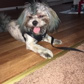 You dirty dog 19 photos 19 reviews pet groomers 44770 san photo of you dirty dog palm desert ca united states solutioingenieria Images