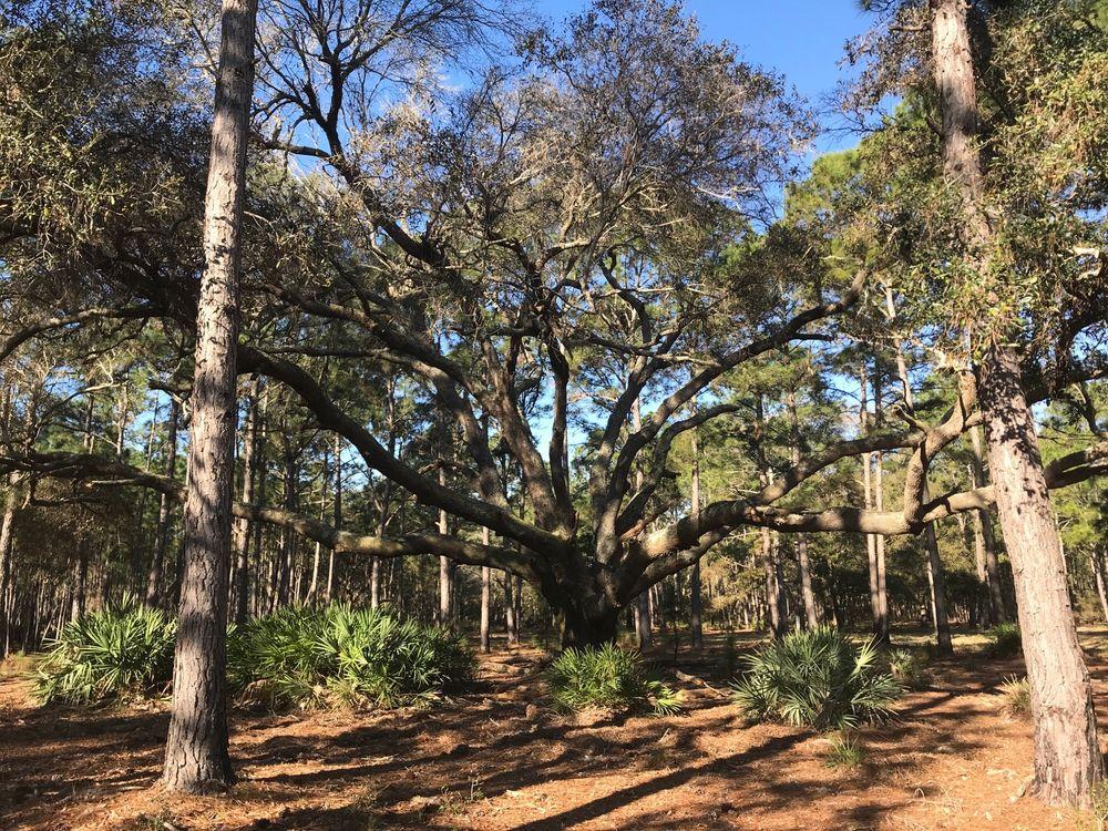 Split Oak Forest: 12901 Moss Park Rd, Orlando, FL