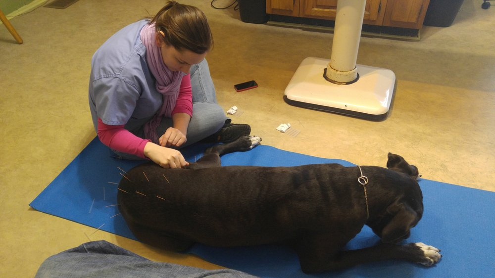 Middletown Animal Clinic: 11423 Main St, Louisville, KY