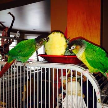 Exotic Birds of Denver - 16 Reviews - Pet Stores - 4796 S