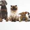 Plantation Animal Clinic: 8702 Bayberry Pl, Louisville, KY