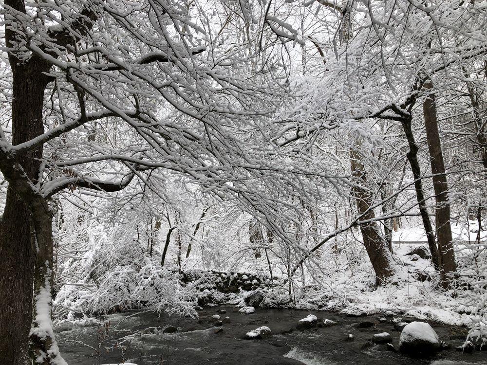 Tree Tops Resort Of Gatlinburg - Slideshow Image 3