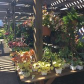 Photo Of Encinal Nursery Alameda Ca United States