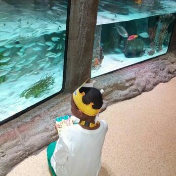 sea life kansas city aquarium 53 photos 78 reviews aquariums 2475 grand blvd kansas. Black Bedroom Furniture Sets. Home Design Ideas