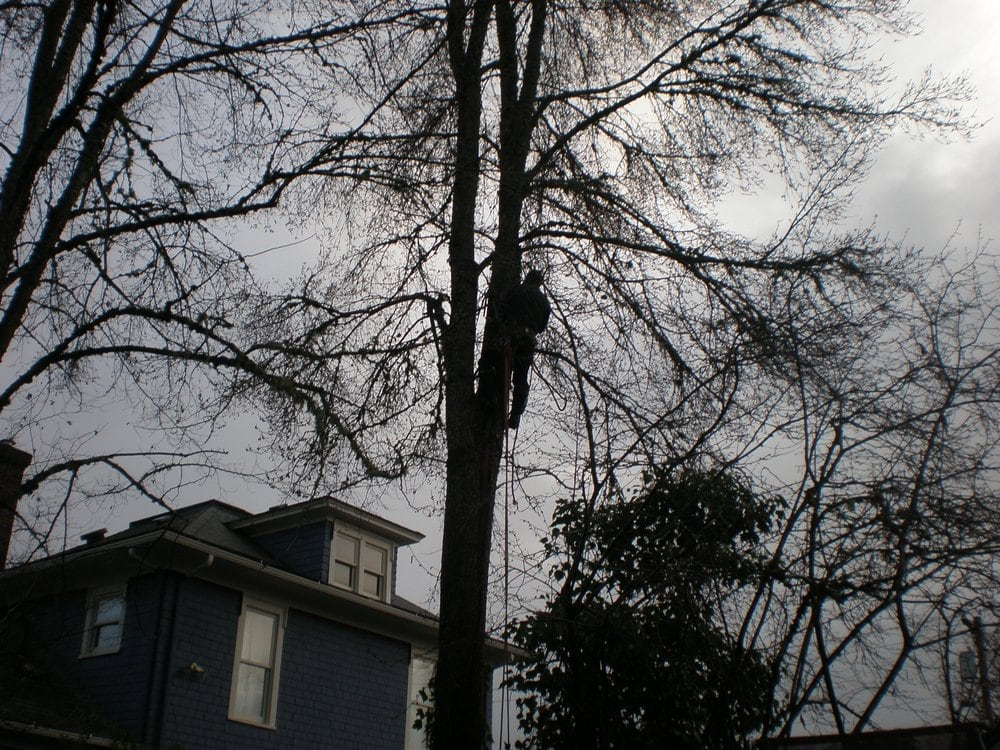 Hazard elm tree removal yelp for Forest grove plumbing
