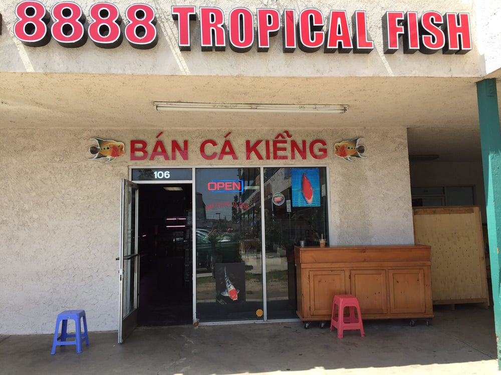 8888 tropical fish 15 photos 11 reviews local fish for Local fish stores