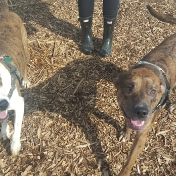 Madison Wi Area Dog Parks