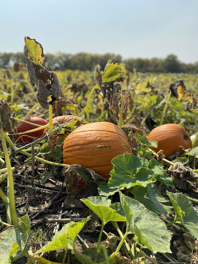 Johnson Farms Plants & Pumpkins