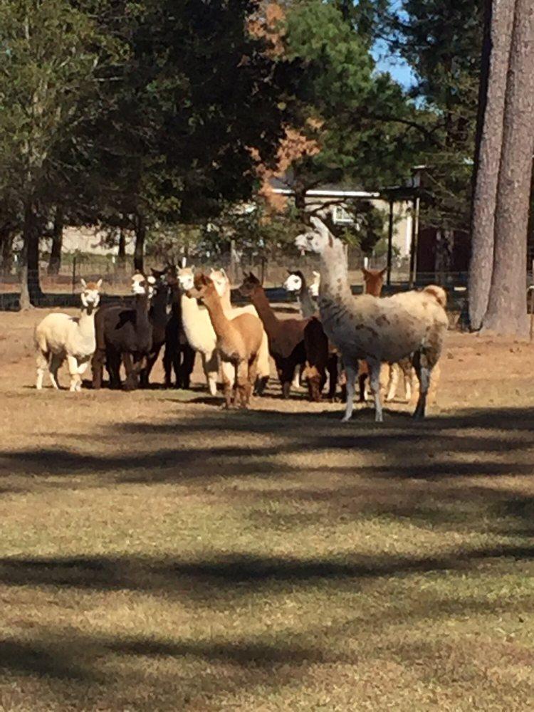 A Stroka Gene-Us Alpacas: 383 County Rd 155, Stringer, MS