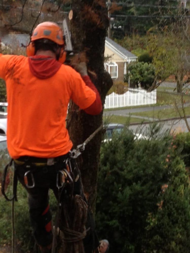 Seattle Tree Care