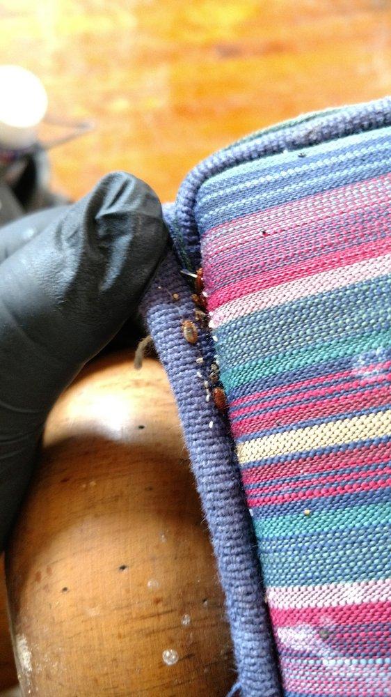 Hadlow Pest Solutions: Albuquerque, NM