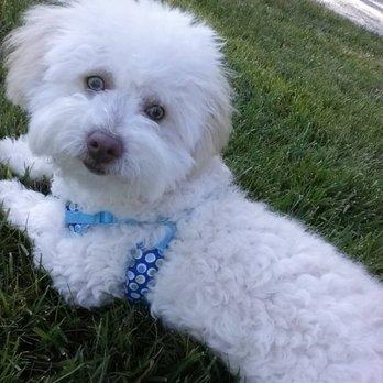 Dog Obedience Training Walnut Ca