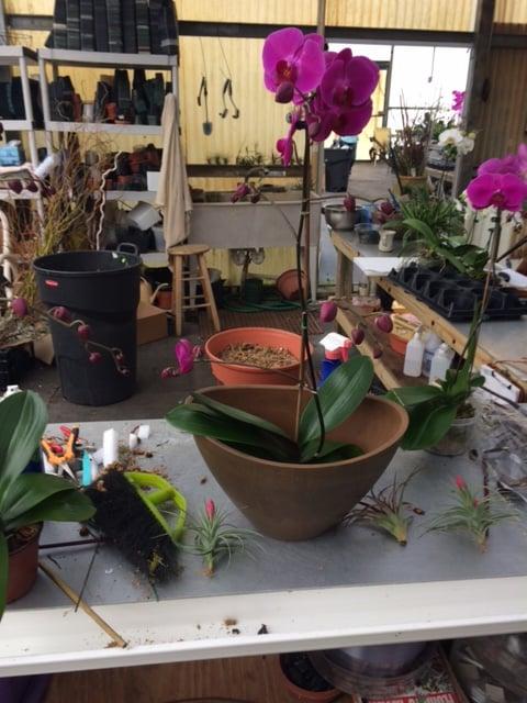Elegant Orchids: 5185 Conklin Dr, Delray Beach, FL