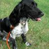 Lori's Neighborhood Pet Care: 1572 Osowaw Blvd, Spring Hill, FL
