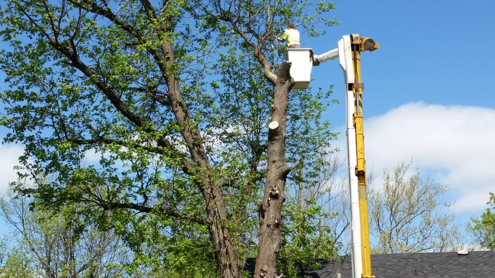 Madison County Tree Service: 1325 12th, Cottage Hills, IL
