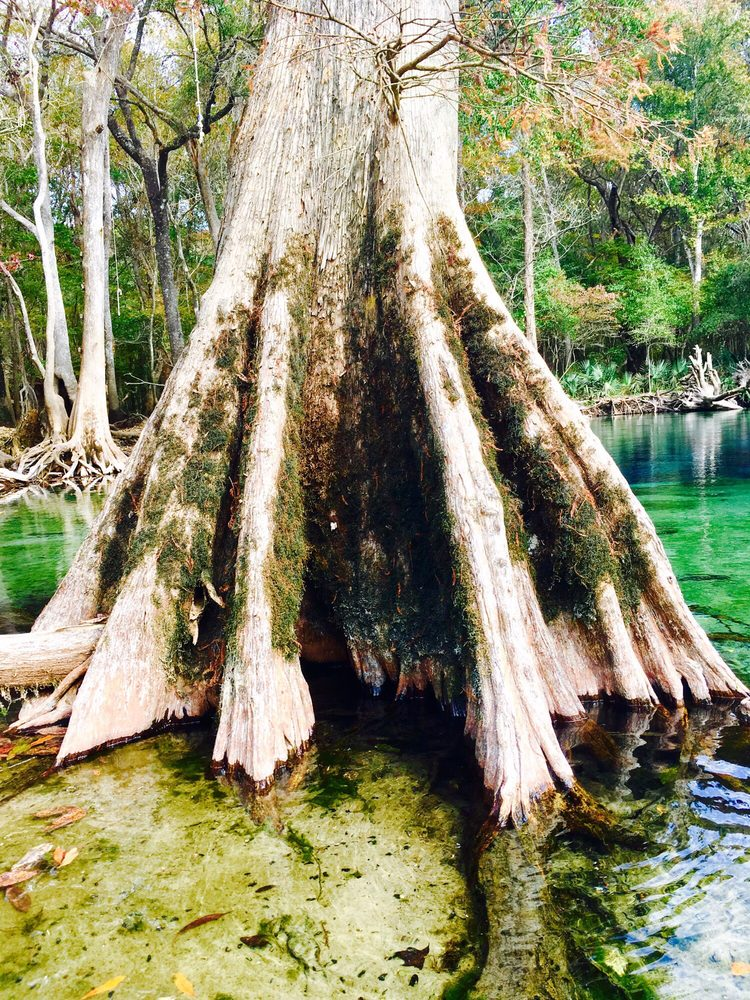 Social Spots from Old Cypress Canoe Rentals
