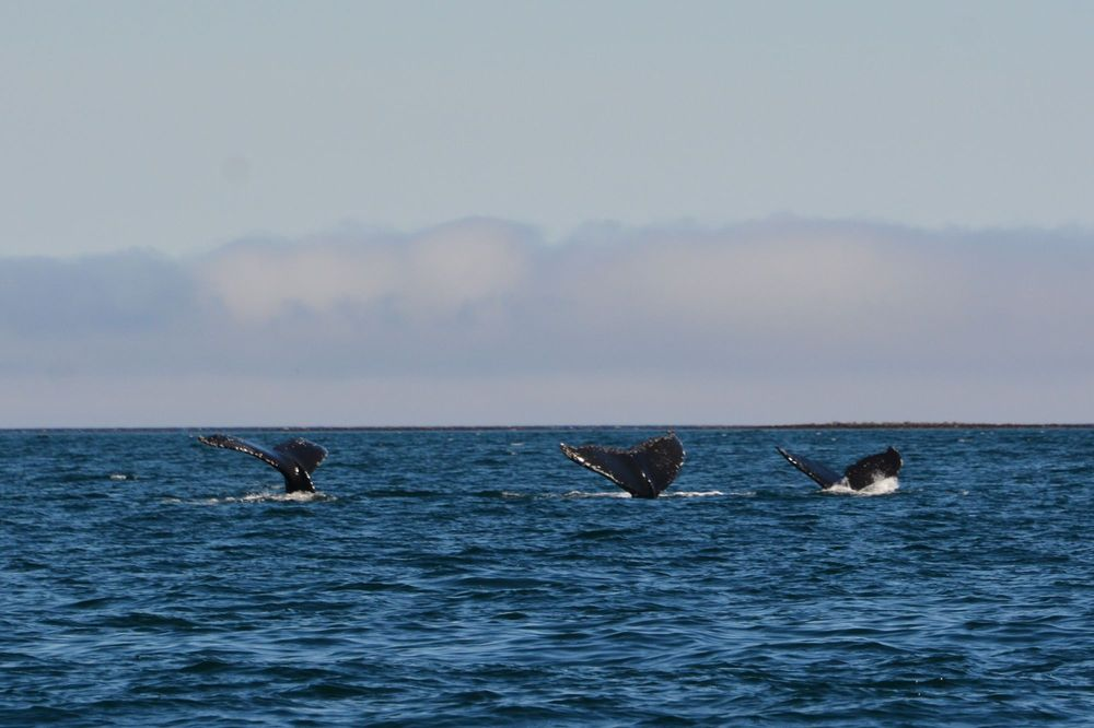 Fishing Vessel Lucille: Unalaska, AK