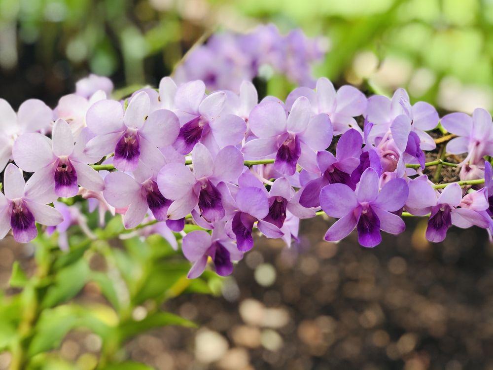 Peace River Botanical and Sculpture Garden: 5827 Riverside Dr, Punta Gorda, FL