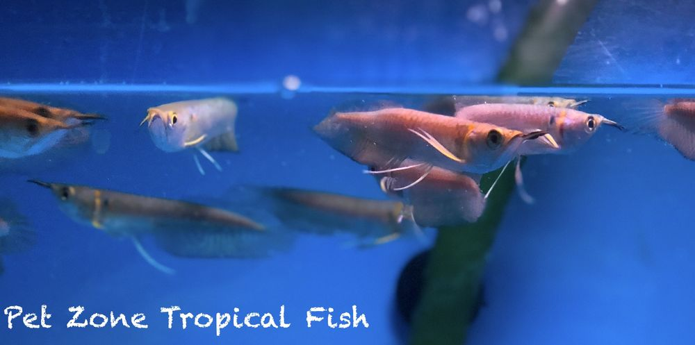 Pet Zone Tropical Fish