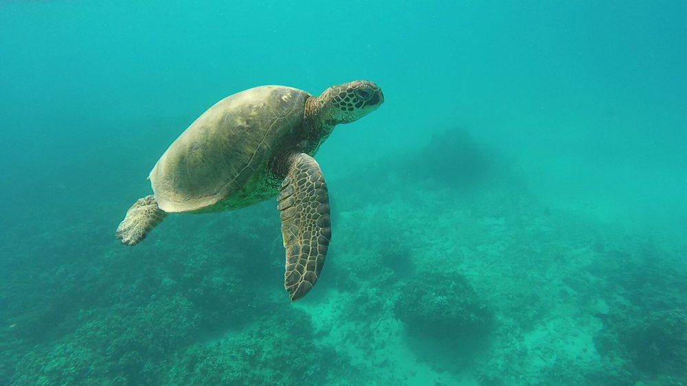 Molokai Fish and Dive: 53 Ala Malama St, Kaunakakai, HI