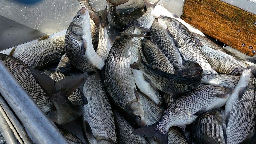 Photo of Bay Port Fish: Bay Port, MI