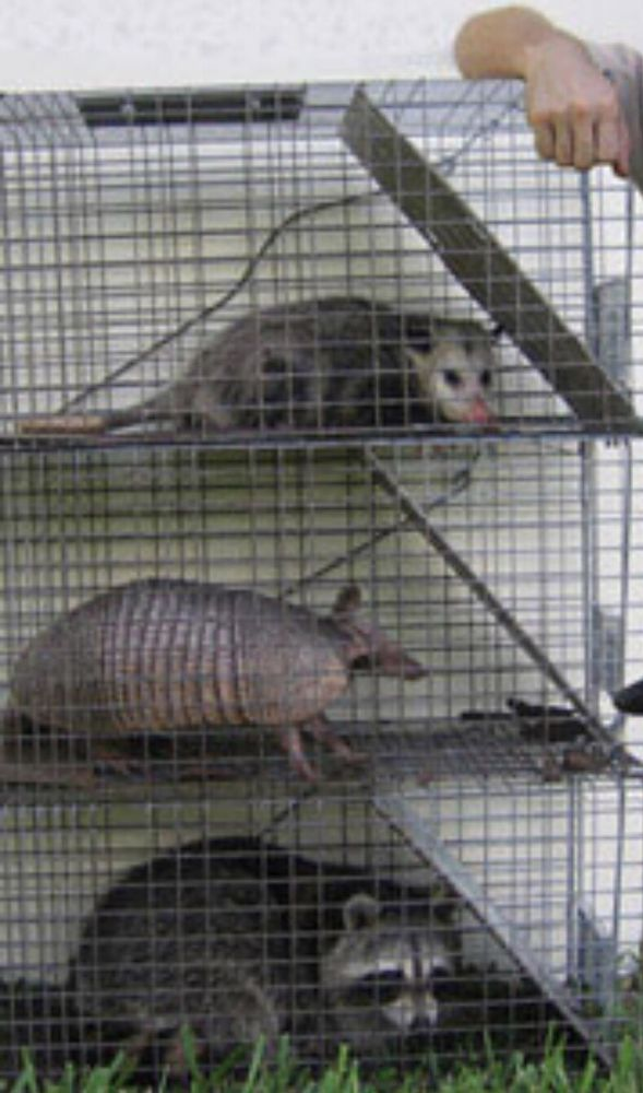 Critter Containment: DeLand, FL