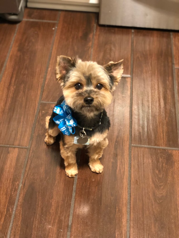 Gentle Paws Pet Grooming: 222 EWisconsin Ave, Appleton, WI