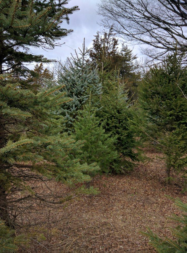 Paproski's Tree Farm: 5 Hattertown Rd, Newtown, CT