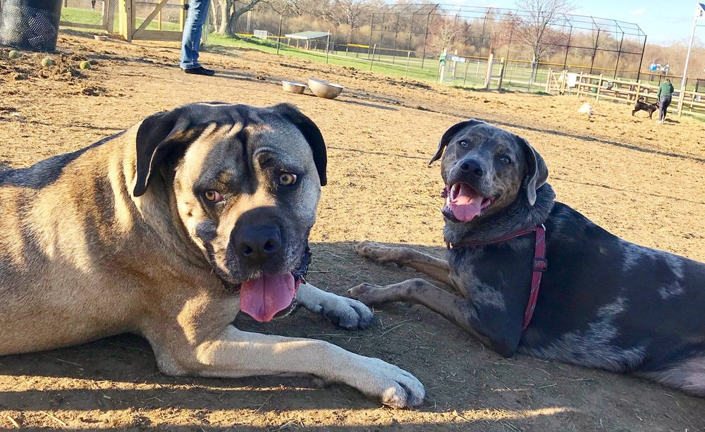 Social Spots from South Kingstown Dog Park
