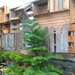 Photo Of My Garden Nursery Bellingham Wa United States Pallet Wall In