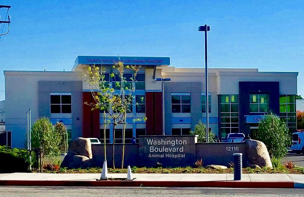 Washington Blvd Animal Hospital
