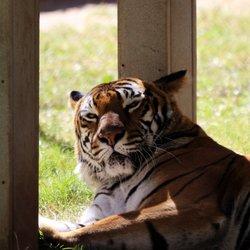 Odessa tx zoo