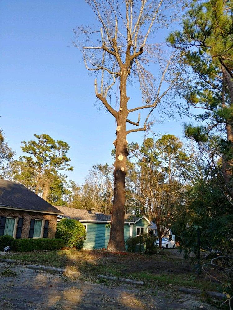Living Color Tree Service: Bennett, NC