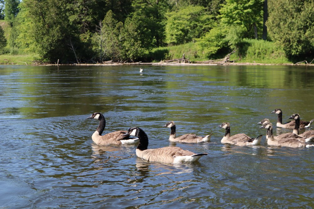 Pine River Paddlesport Center: 9590 M 37, Wellston, MI