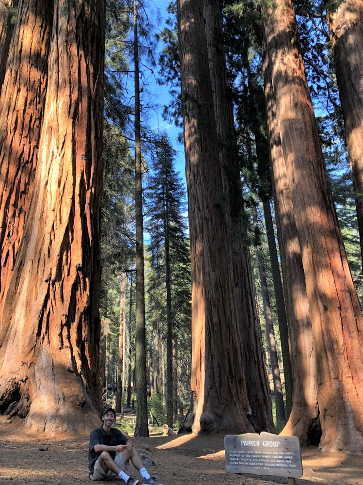 Tunnel Log: Sequoia National Park, CA