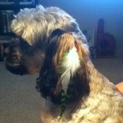 Perfect paws pet salon 12 reviews pet groomers 6333 for A perfect pet salon