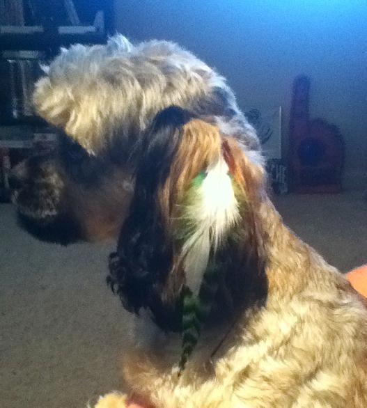 Perfect paws pet salon 13 reviews pet groomers 6333 for A perfect pet salon