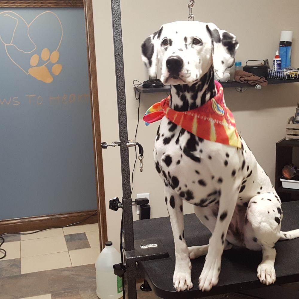 Paws To Heart Dog Grooming: 5800 County Rd 11, Garrett, IN