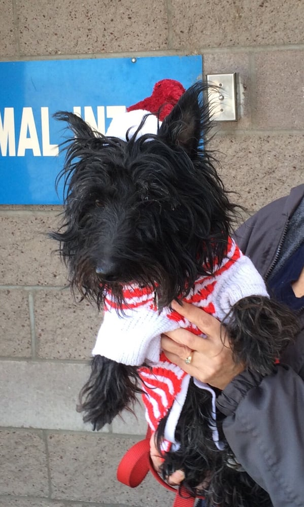Westside Animal Welfare Department - 30 Photos - Animal ...